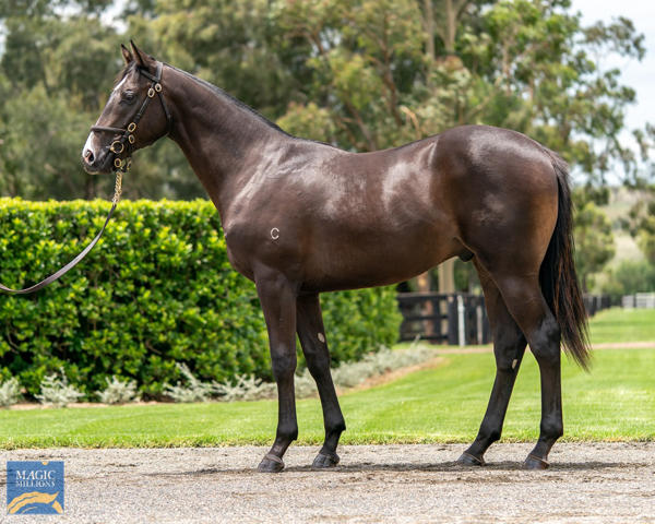 Coolmore Stud - MM Gold Coast Yearling Sale Lot 864