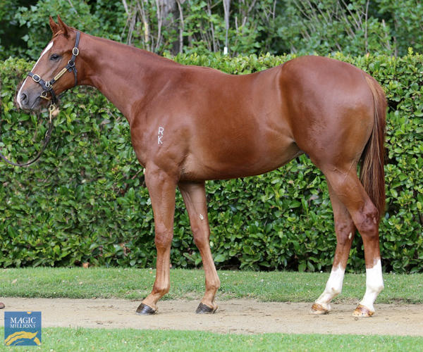 Newhaven Park - MM Gold Coast Yearling Sale Lot 874