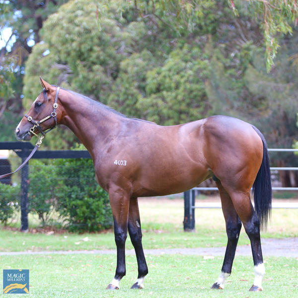 Mill Park Stud - MM Gold Coast Yearling Sale Lot 879