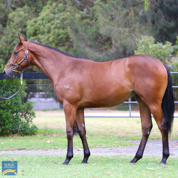 Mill Park Stud - MM Gold Coast Yearling Sale Lot 897