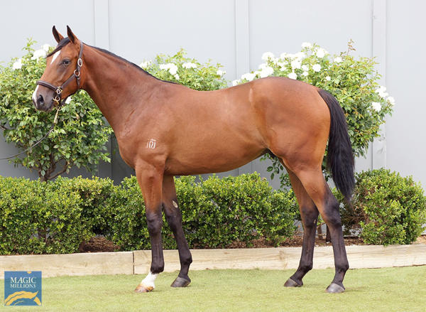 Bowness Stud - MM Gold Coast Yearling Sale Lot 902