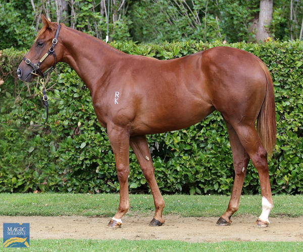 Newhaven Park - MM Gold Coast Yearling Sale Lot 910