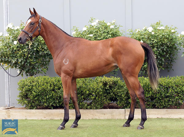 Bowness Stud - MM Gold Coast Yearling Sale Lot 929