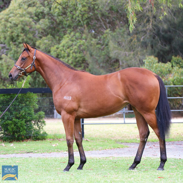 Mill Park Stud - MM Gold Coast Yearling Sale Lot 94