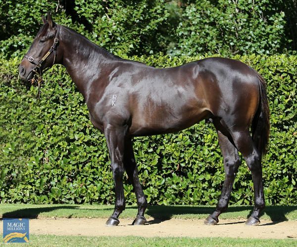 Newhaven Park - MM Gold Coast Yearling Sale Lot 953