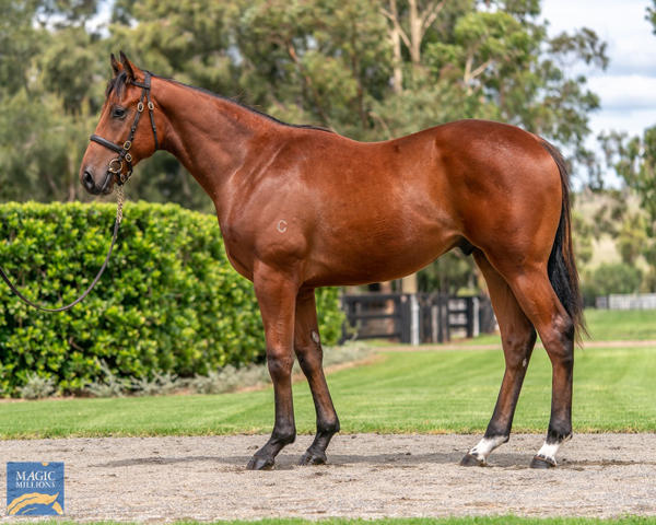 Coolmore Stud - MM Gold Coast Yearling Sale Lot 97