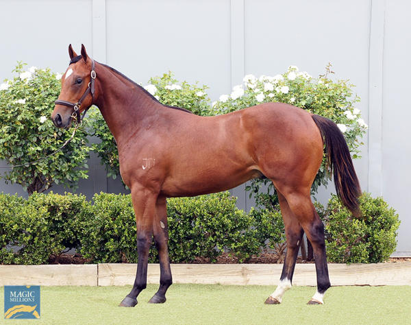 Bowness Stud - MM Gold Coast Yearling Sale Lot 982