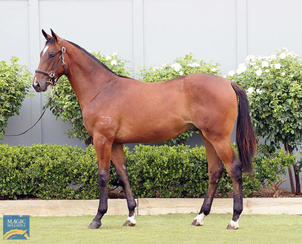 Bowness Stud - MM Gold Coast Yearling Sale Lot 997