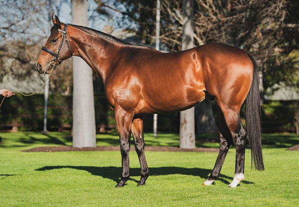 Yes Yes Yes (AUS) at Coolmore Stud