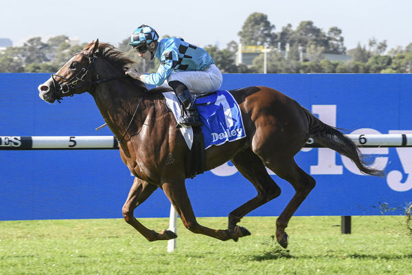 Anders proves too strong at Rosehill - image Steve Hart