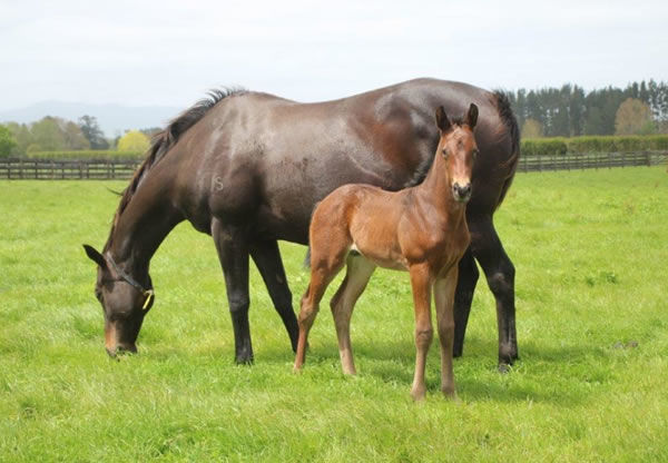 Full brother to Fascino pictured wt Windsor Park