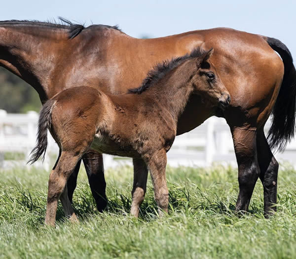 Tosen Stardom colt from Tie Me Up