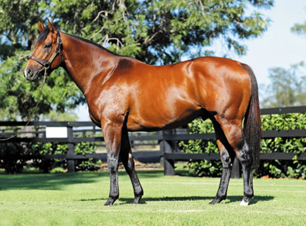 Deep Field has three winners from three runners from mares by Choisir and now a SW!