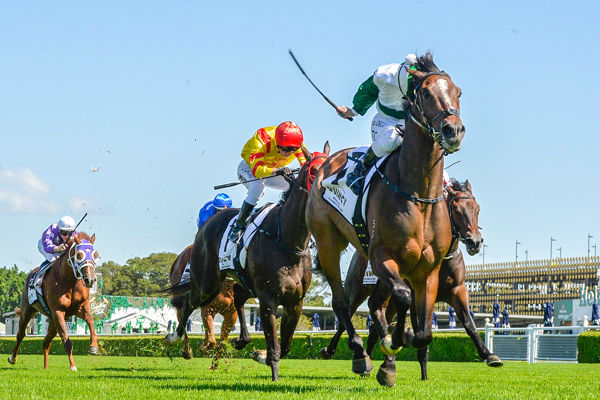 Entente toughs it out in Carbine Club Stakes _ image Bradley Photography