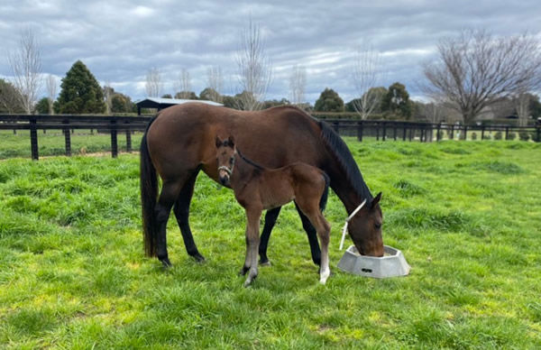 Mirjulisa Lass produced a filly by Brutal this spring for Gilgai Farm.