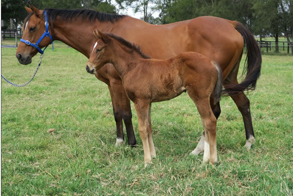 Florentina pictured last spring with her Kingman filly at Davali Thoroughbreds.