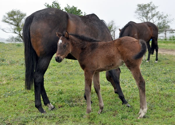 How Womantic as a foal