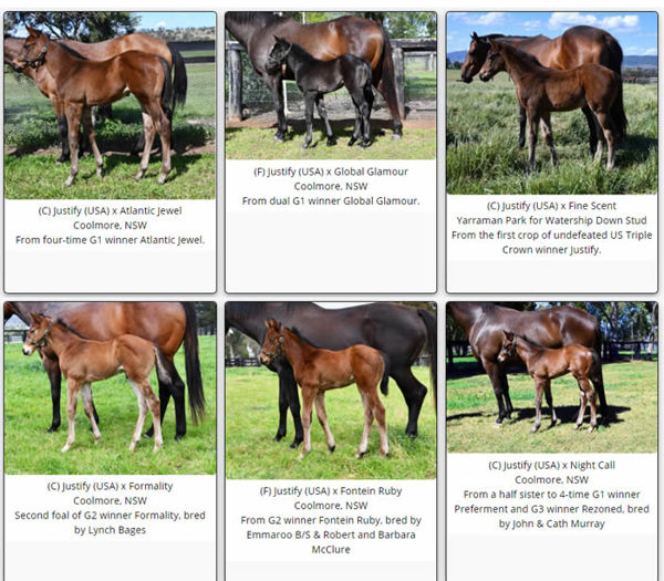 Click to see more Justify foals on the Breednet Foal Gallery.