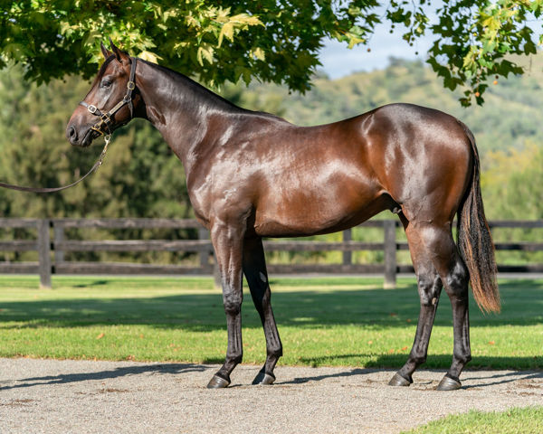 $1.15 million Zoustar colt from Fireworks, most expensive yearling for his sire to date.