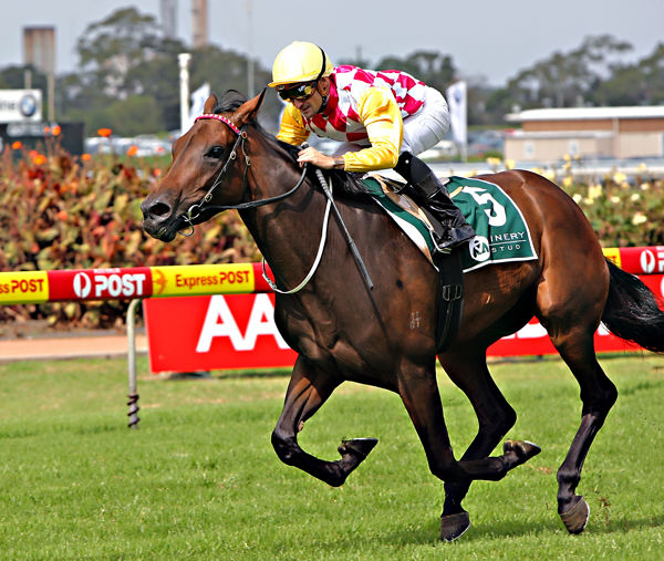 Mirjulisa Lass captures the Gr 1 Vinery Stud Stakes (image mark Smith)