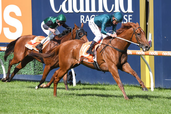 Mystery Love makes it four wins from six starts with a flawless dispaly at Caulfield - image Racing Photos