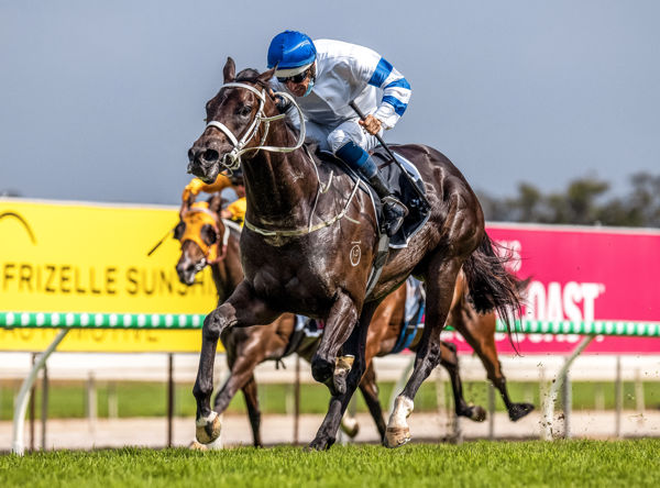 Shaquero flying the flag for Shalaa (IRE) (Grant Courtney)