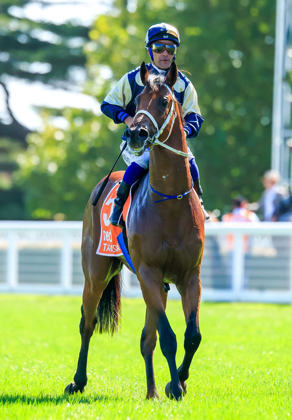 Tagaloa is one of 12 stakes-winners by Lord Kanaloa from mares carrying Sunday Silence