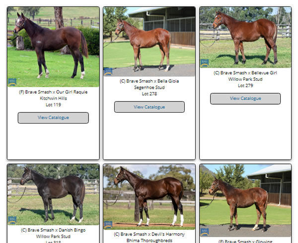 Click through to see galleries of the weanlings by first season sires at the MM National Weanling Sale.
