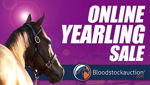 Bloodstockauction Offer Online Yearling Sale