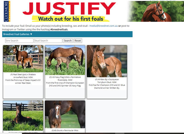 Click to visit the 2020 Foal Gallery sponsored by Justify.