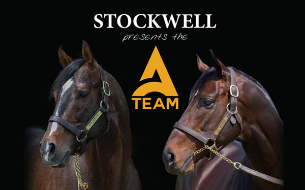 Click to visit Stockwell Thoroughbreds.