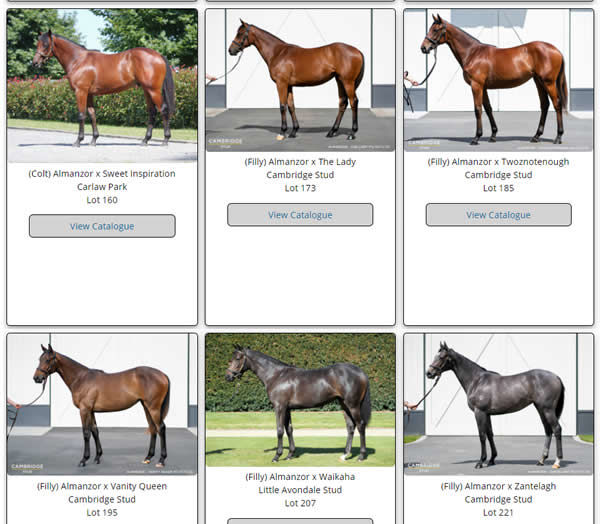 Click here to see all Almanzor yearling images uploaded to NZB.