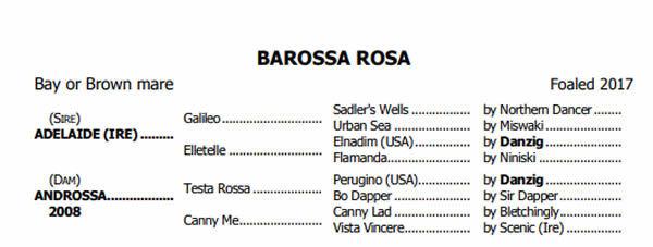 Barossa Rosa pedigree