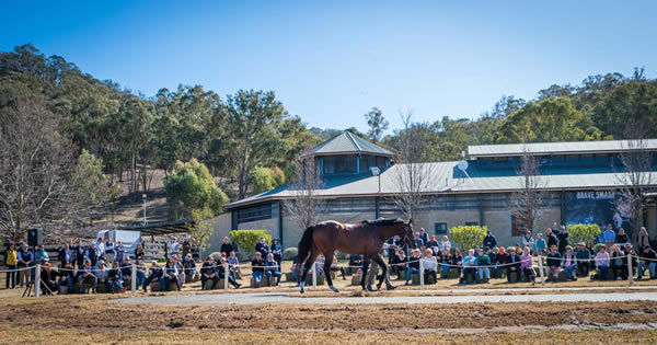 Stallion parades with crowds in attendance will be a thing of the past this year