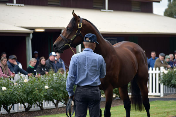 Doubtland was a $1.1million yearling.