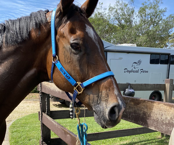 Lenny leaves Daybreak Farm to join the NSW Mounted Police in 2020.