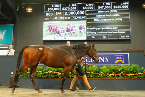 Entries are open for the Magic Millions National Sale