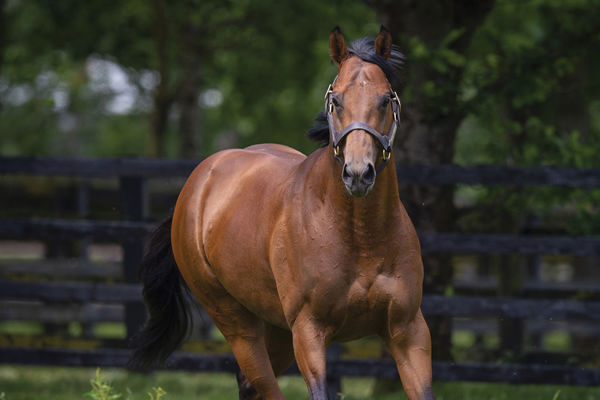National Defence - click for more information on this Premium stallion.