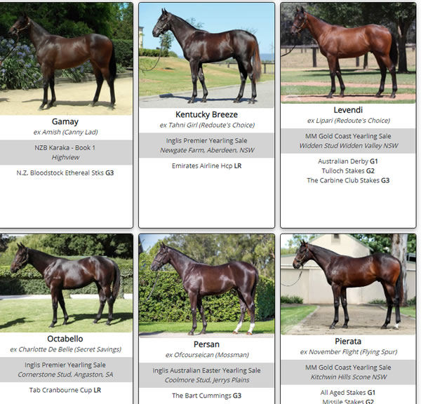 Click here to the full gallery of Pierro SW's as yearlings.