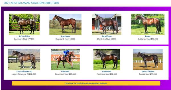 Click to visit Premium Stallions Sire Directory.