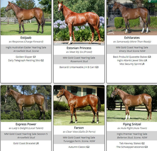 Click to see the full gallery of Snitzel SW's as yearlings.