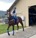 Cox Plate Contenders Enjoy Hinterland Thoroughbreds Holiday