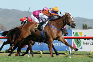 Lots 124 and 274 are relatives of 2016 Ready to Run graduate and Group Two winner Te Akau Shark (NZ).