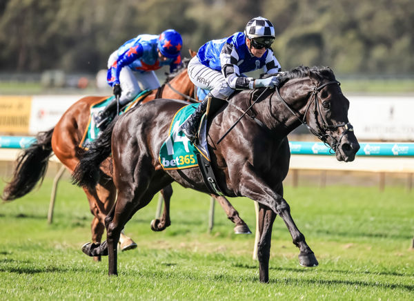 Four on the bounce for Ironclad (image Grant Courtney)