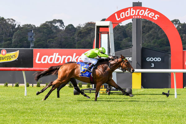 Affair To Remember leaves it late - racing photos