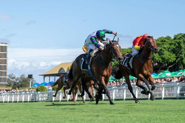 Alpine Edge makes a winning career debut in Phelan Ready Stakes (Image Racing Qld)