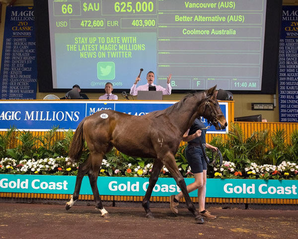 Alternate was among the top sellers at the 2018 MM National Weanling Sale.