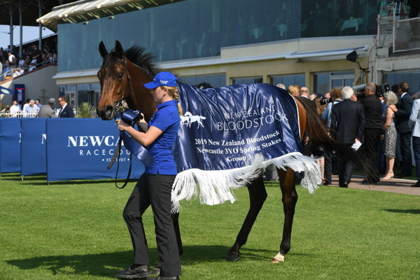 Asiago sports the winners rug - images Steve Hart