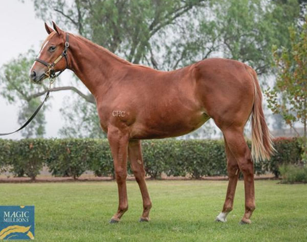 Avaricious was a $200,000 Magic Millions purchase