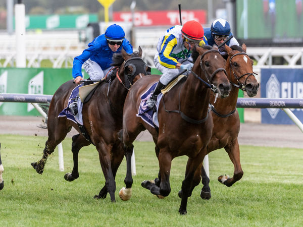 Banquo will run in the G1 VRC Newmarket Handicap this Saturday - image Grant Courtney